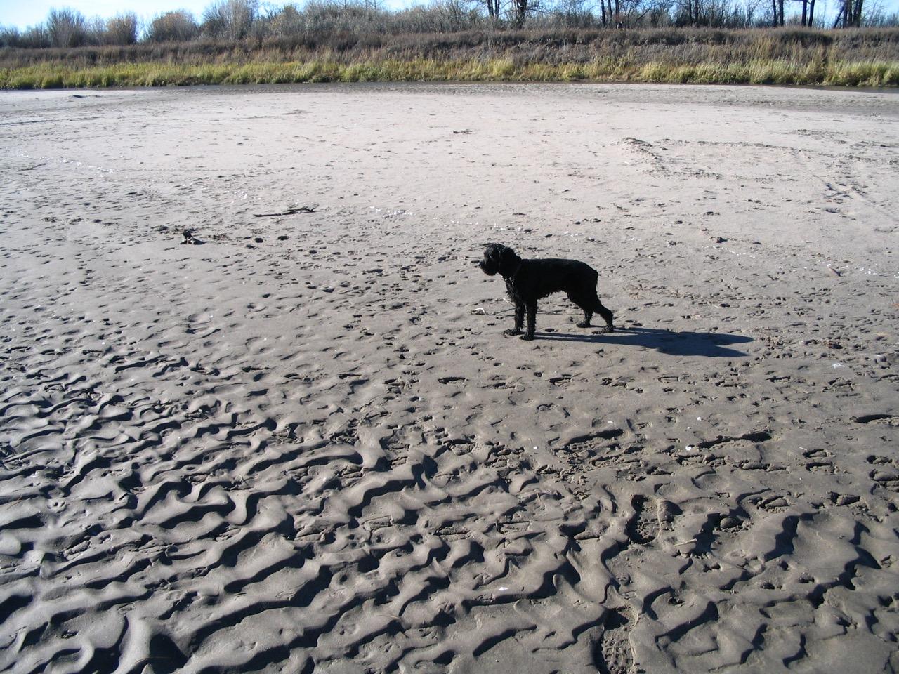Sand ripples deposited by the South Saskatchewan River near Saskatoon, Saskatchewan, Canada [KP]