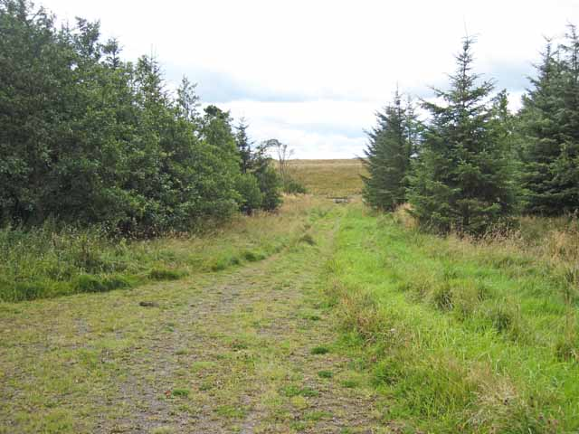 Southern edge of Harewood Forest - geograph.org.uk - 541067
