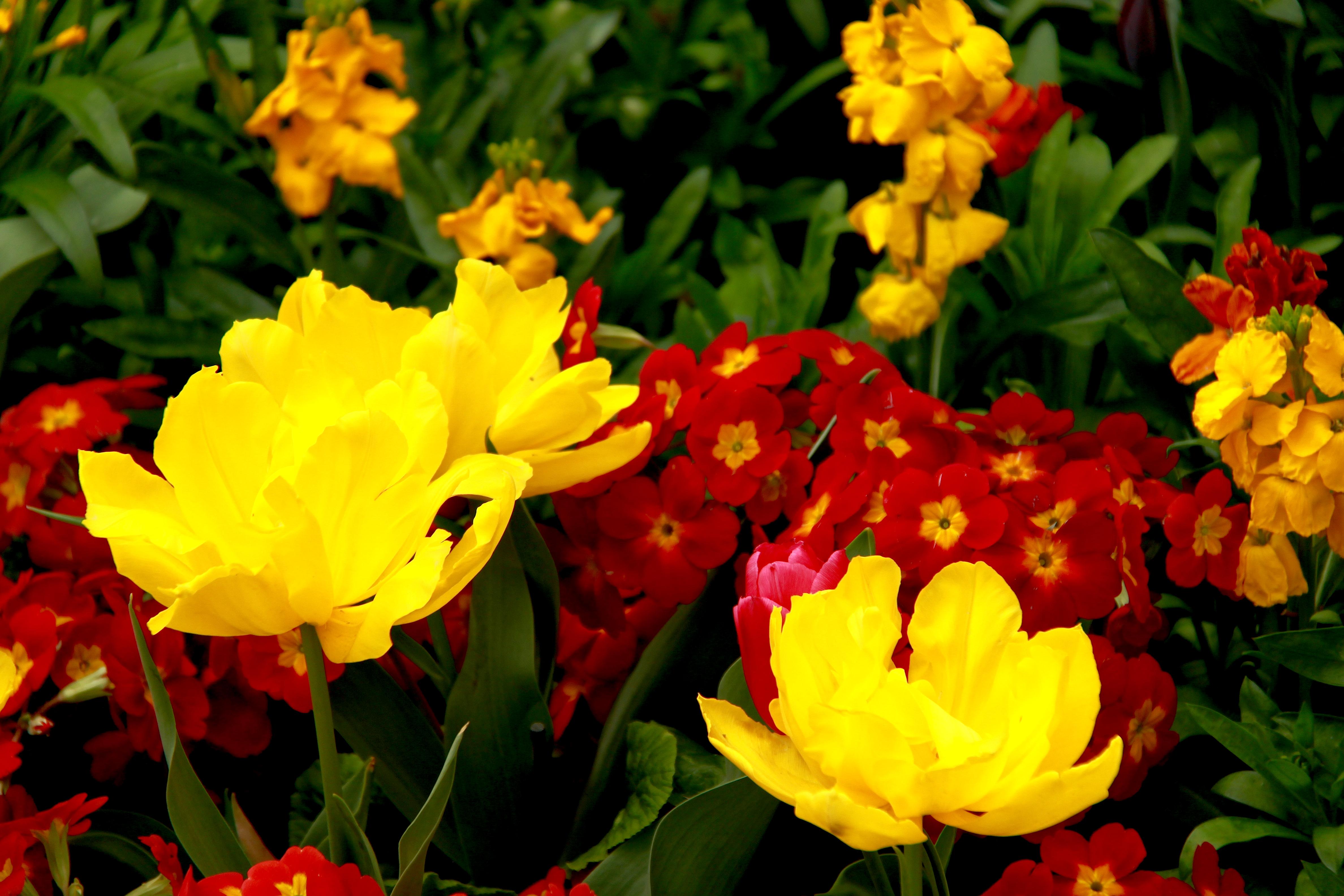 Filespring flowers in london 6967710212g wikimedia commons filespring flowers in london 6967710212g mightylinksfo