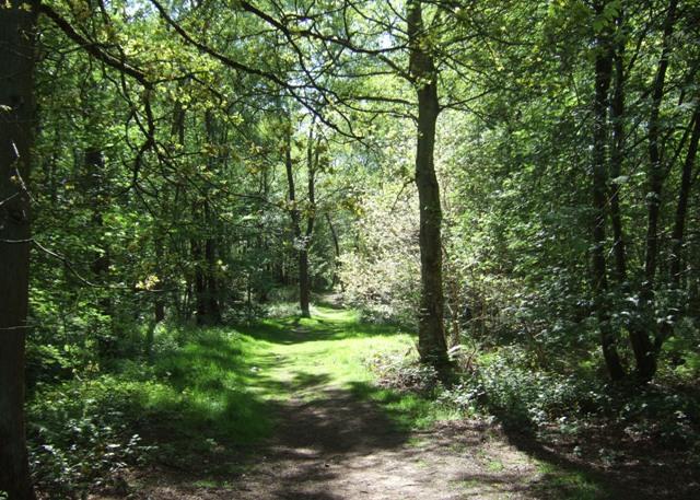 Track through Hanchurch Woods - geograph.org.uk - 1306596
