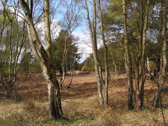 File:Woodland near Theberton - geograph.org.uk - 284674.jpg