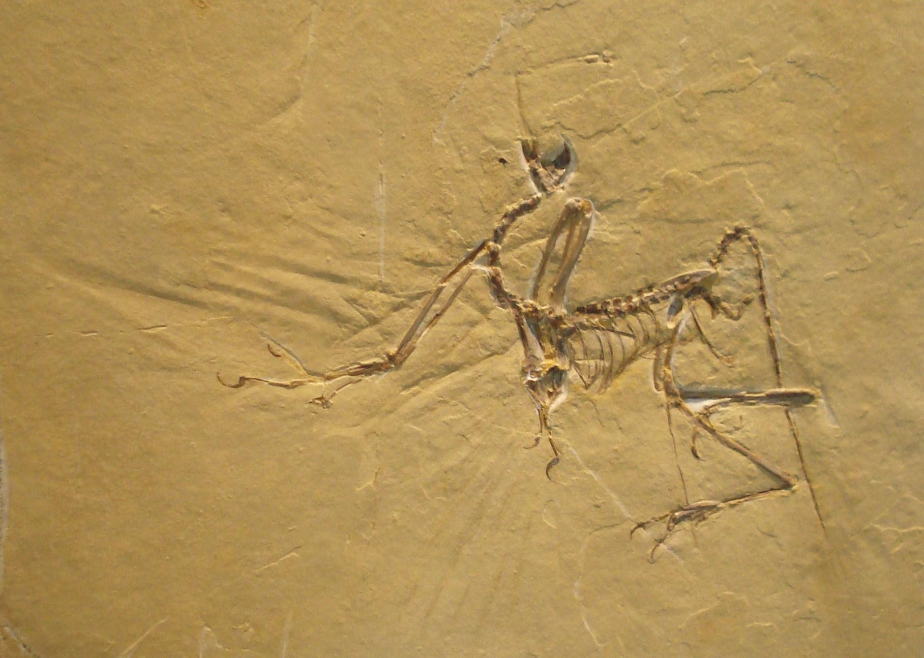 Fossiel  Wikipedia