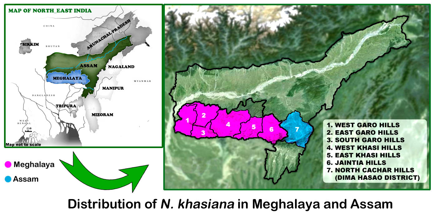FileDistribution Map of N khasiana in Meghalaya and Assamjpg