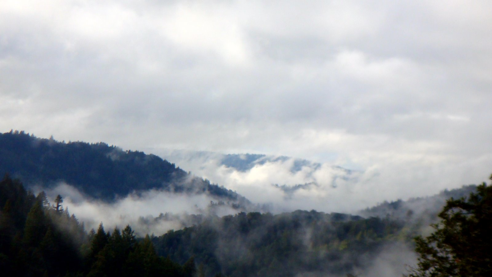 File Fog In The Santa Cruz Mountains Jpg Wikimedia Commons