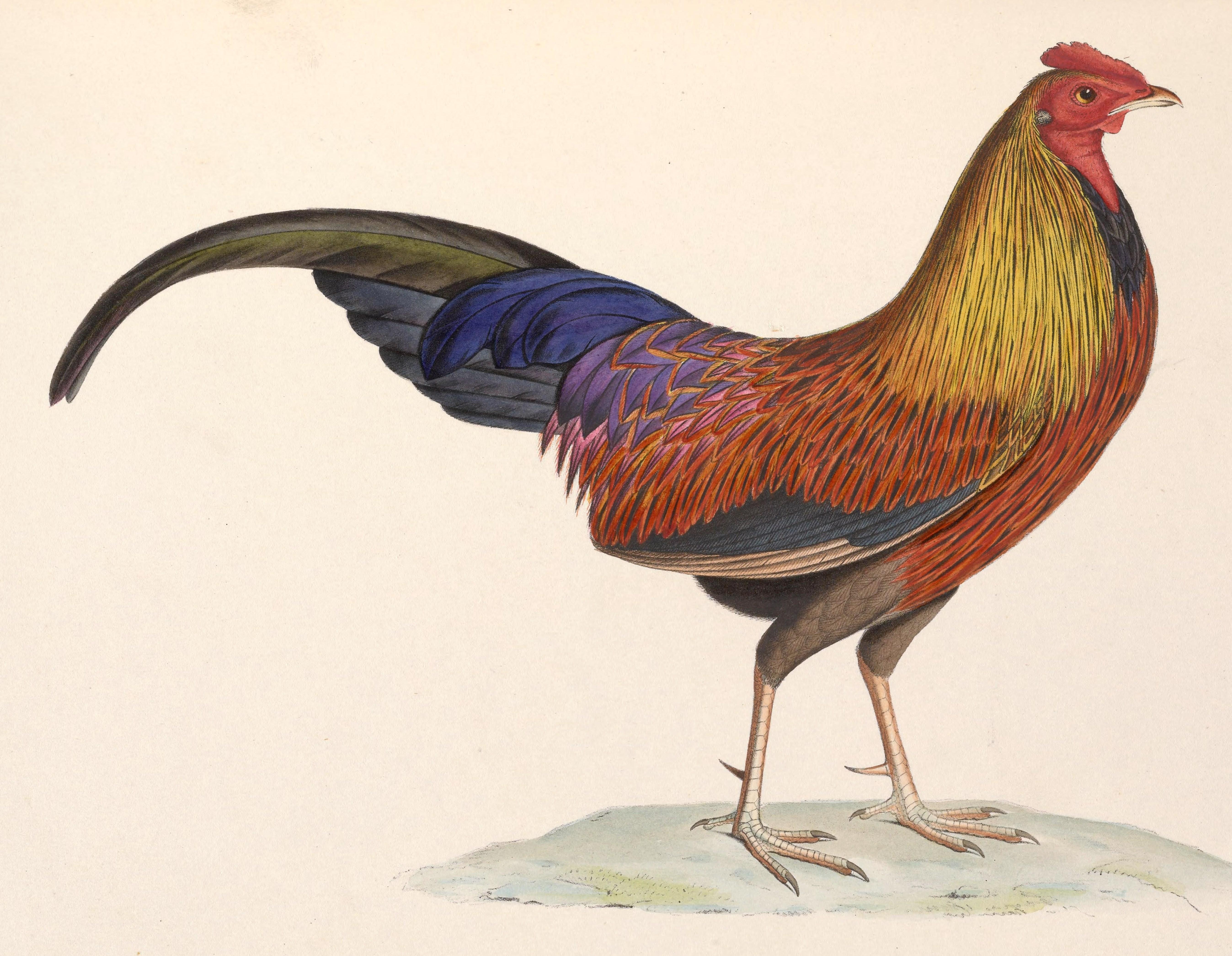 χουγκέϊ πουλί