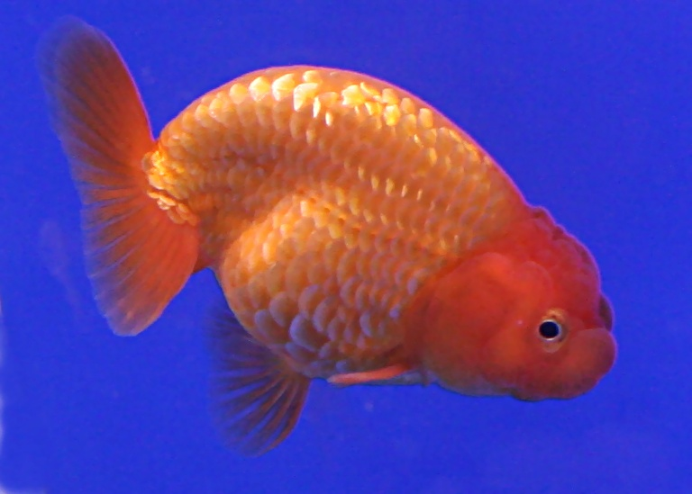 Best Tropical Fish Food Supplier