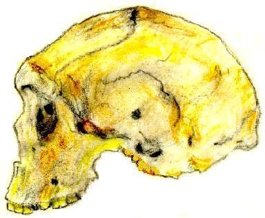 File:Homo rhodesiensis.jpg