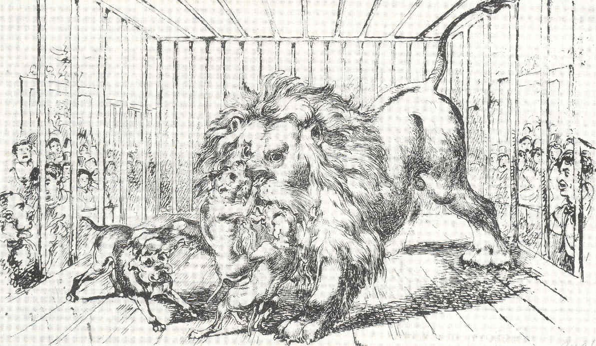 Lion-baiting - Wikipedia