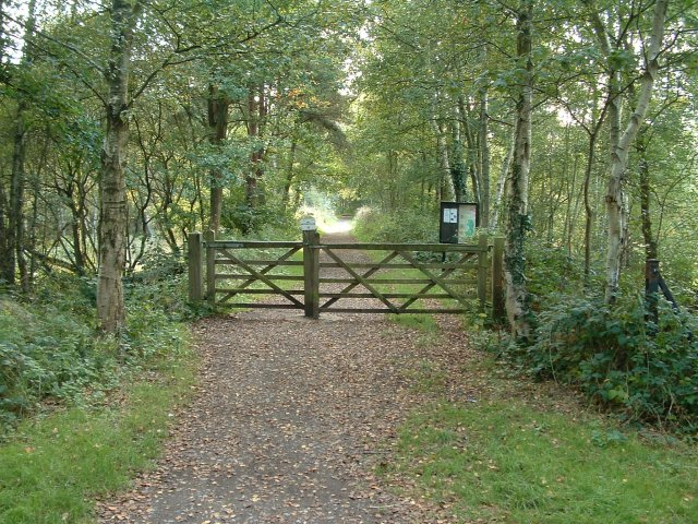 Liss Riverside Railway Walk, Liss Forest, Hampshire - geograph.org.uk - 57210
