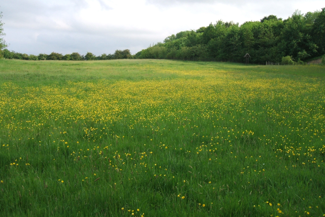 Meadow, west side of Daventry Country Park - geograph.org.uk - 1431678