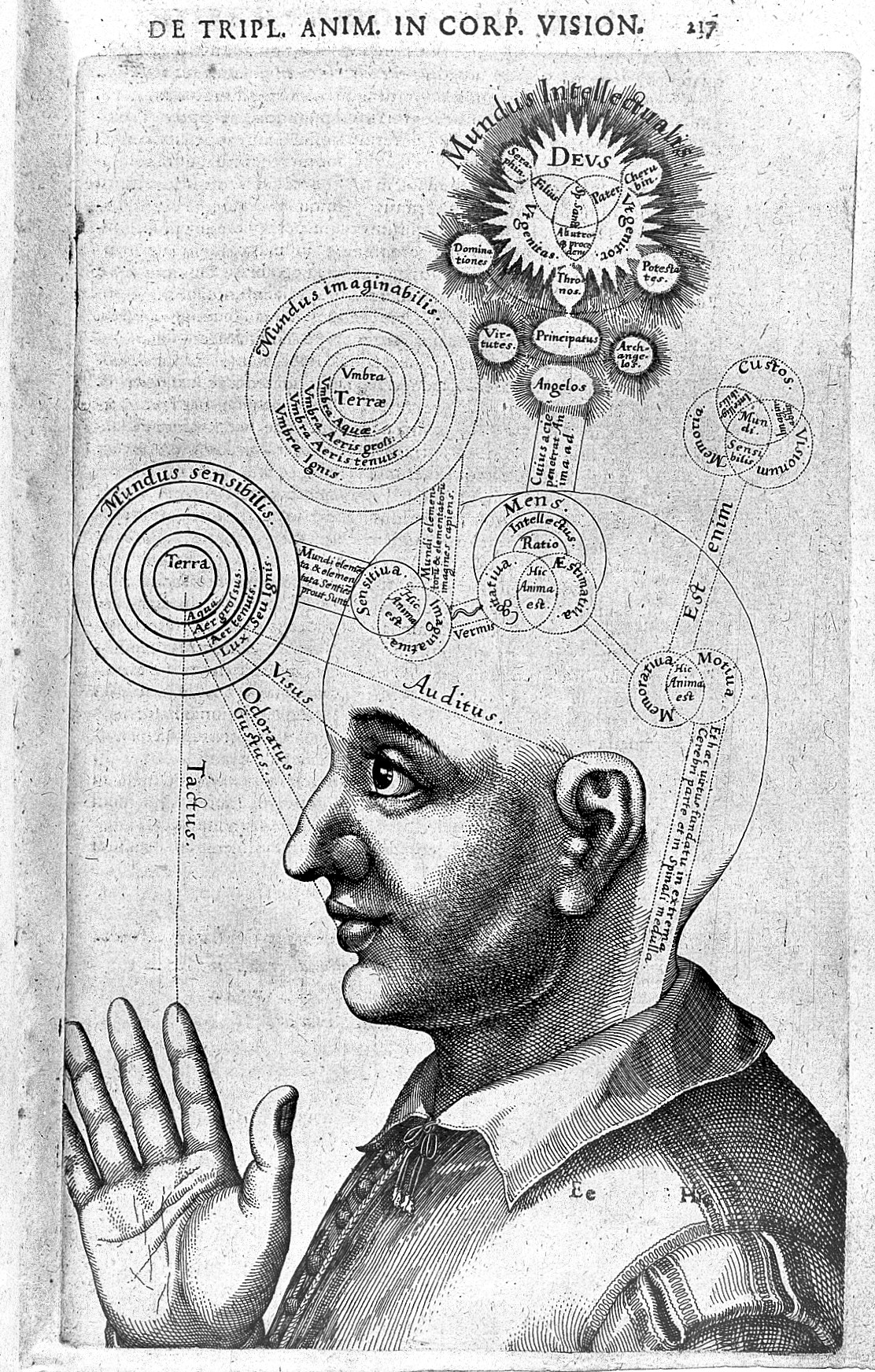 Mental image - Wikiquo...