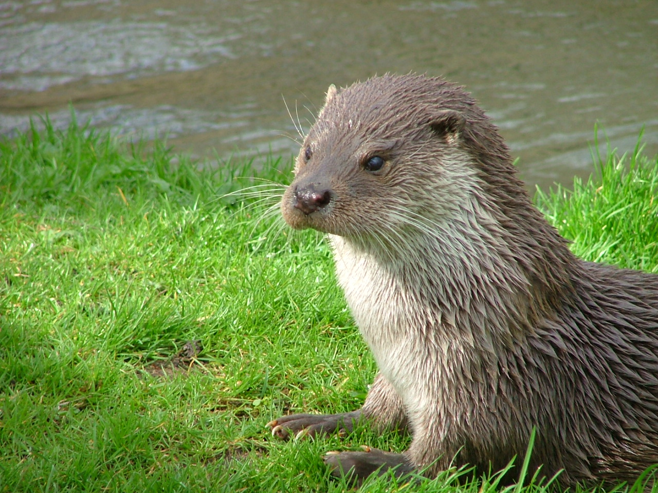 Otters In The Cotswolds Broadway Manor Cottages