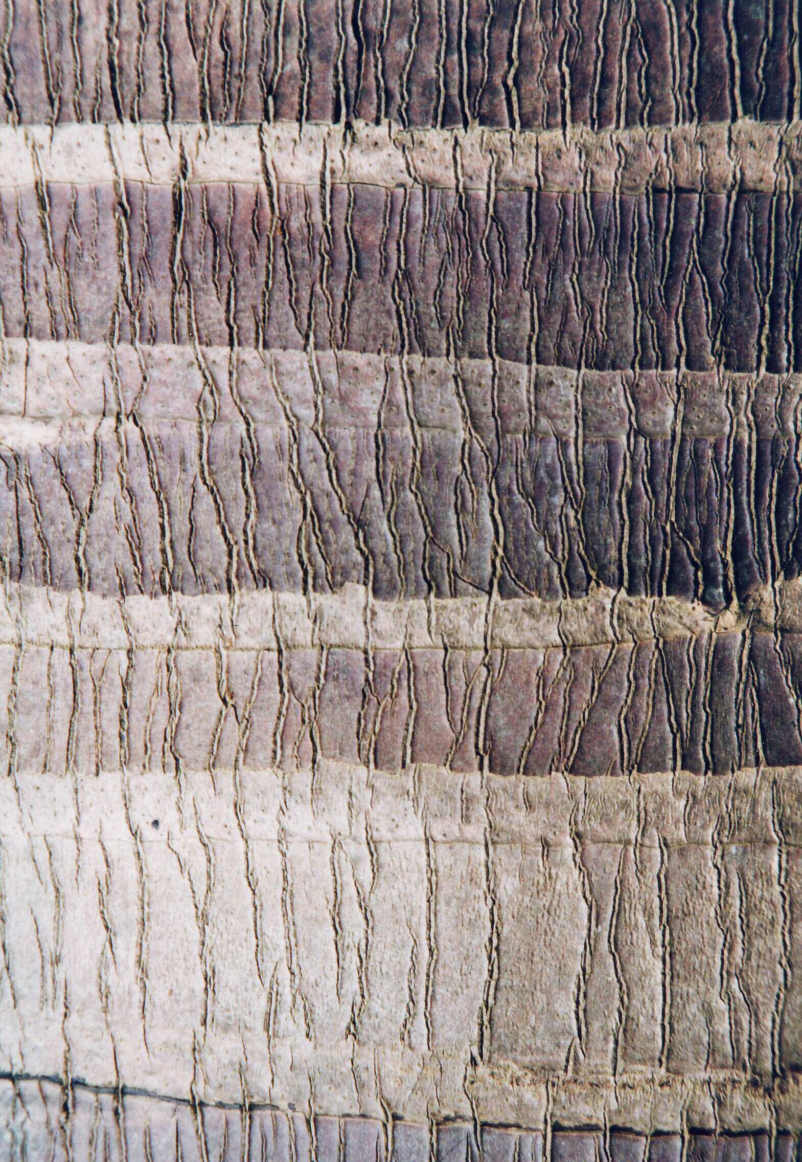 Painting Tree Bark Acrylic