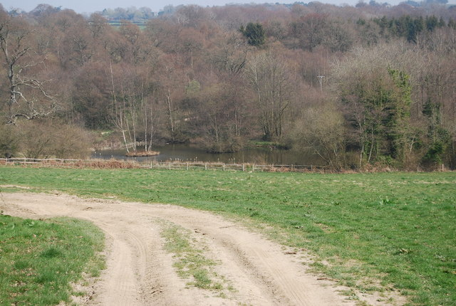 Pond on the edge of Browndown Wood - geograph.org.uk - 1251658