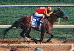 Real Quiet American-bred Thoroughbred racehorse