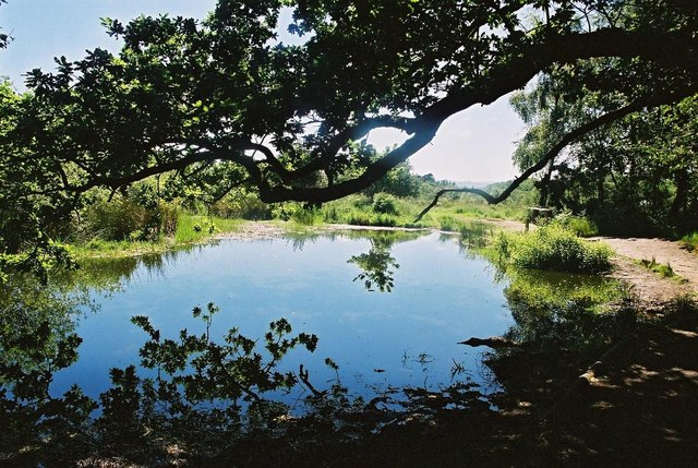Rushy Pond on a hot summer's day - geograph.org.uk - 506543