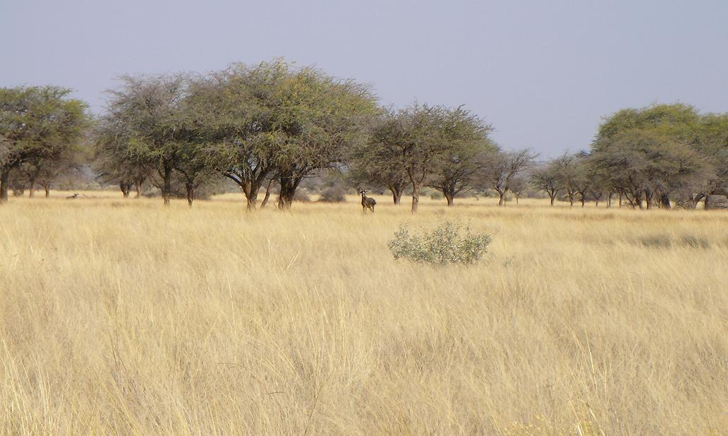 File:Savannah near Kuruman.JPG - Wikimedia Commons