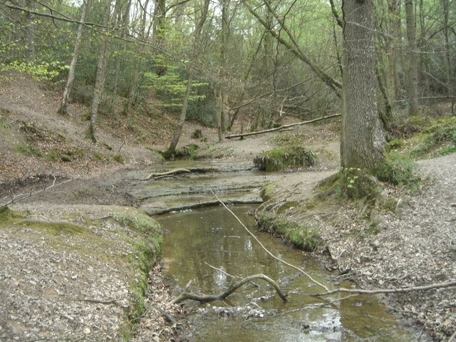 Sheepwash Ghyll, St Leonard's Forest - geograph.org.uk - 413076