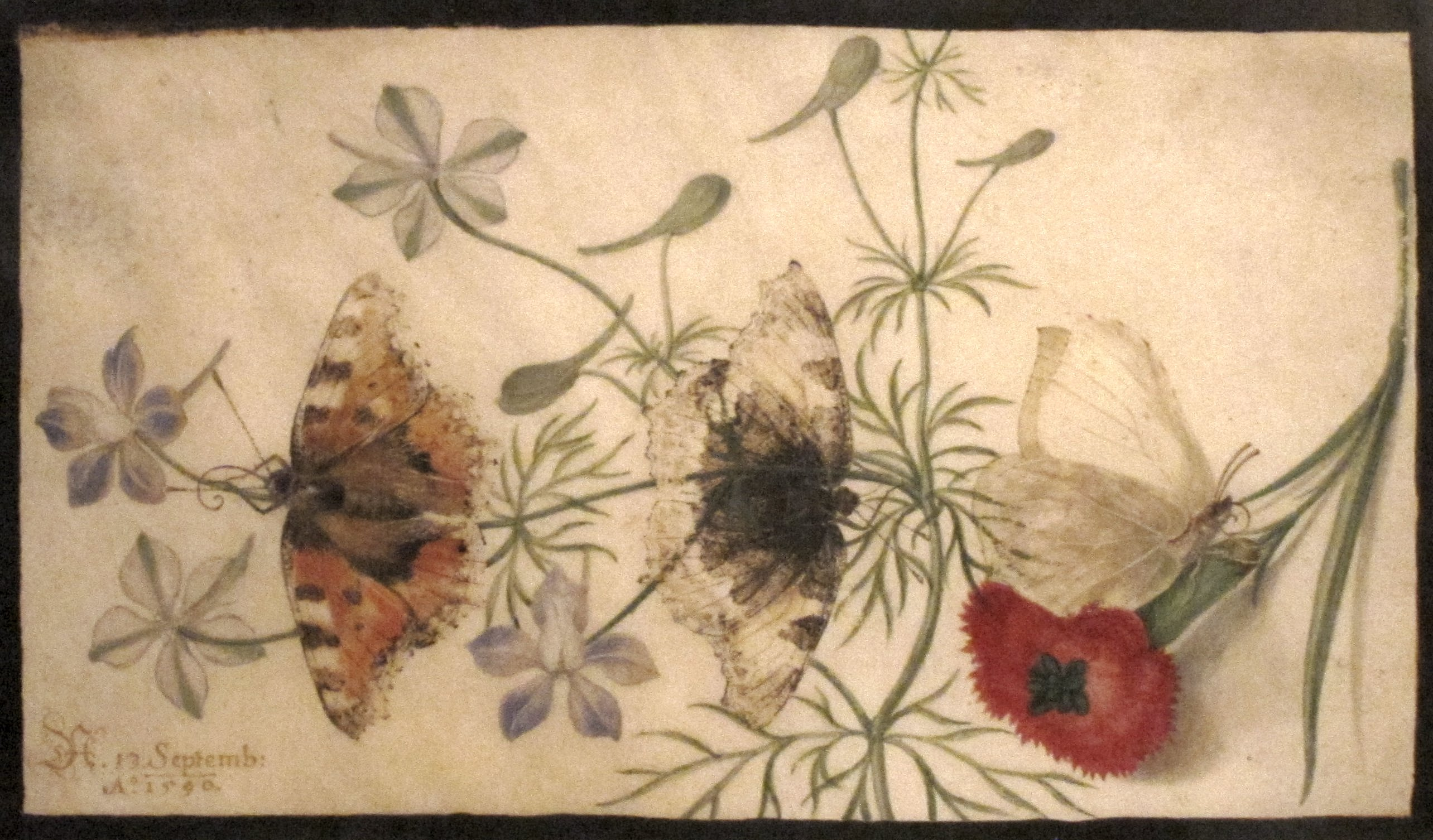 History of watercolor art - File Studies Of Flowers And Butterflies Watercolor Painting On Parchment By Joris Hoefnagel