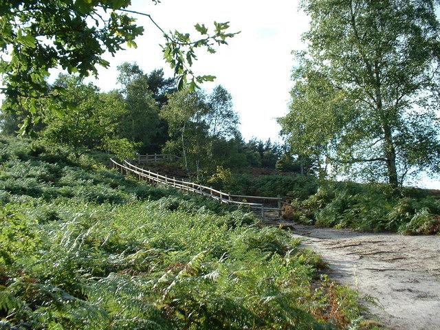 The new wooden path at Dersingham Bog. - geograph.org.uk - 157344