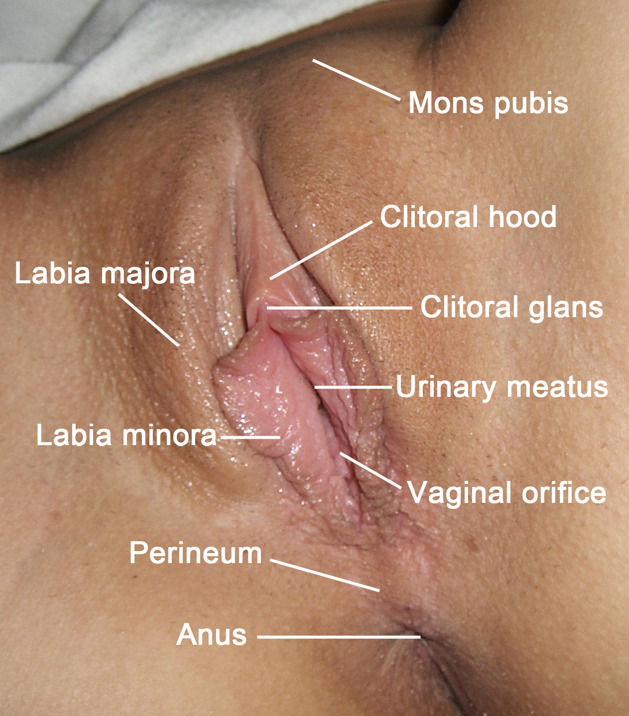 labia majora (or outer labia) | pink pleasure place