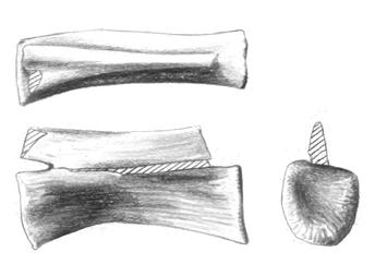 Walgettosuchus.png