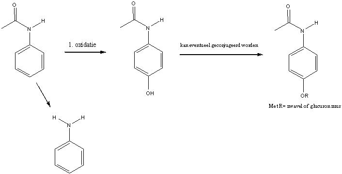 file acetanilide metabolisme jpg