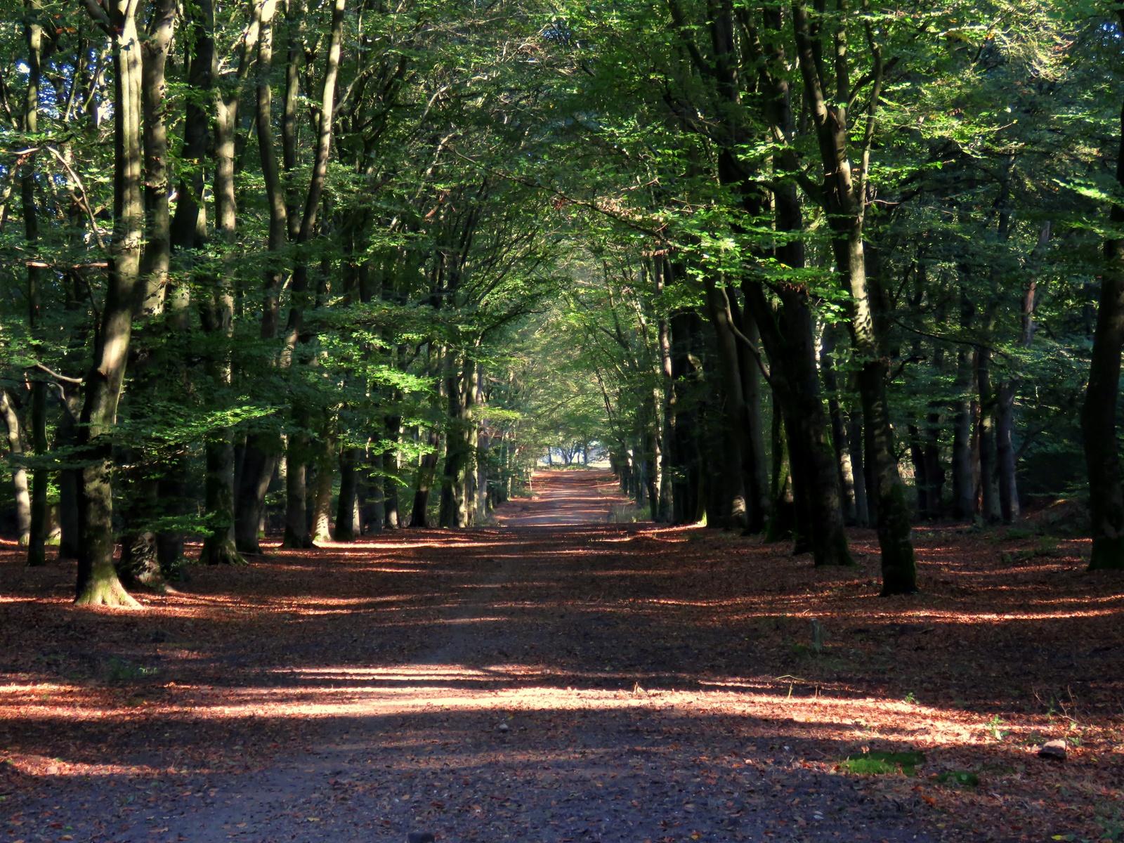 Afbeeldingsresultaat voor bos