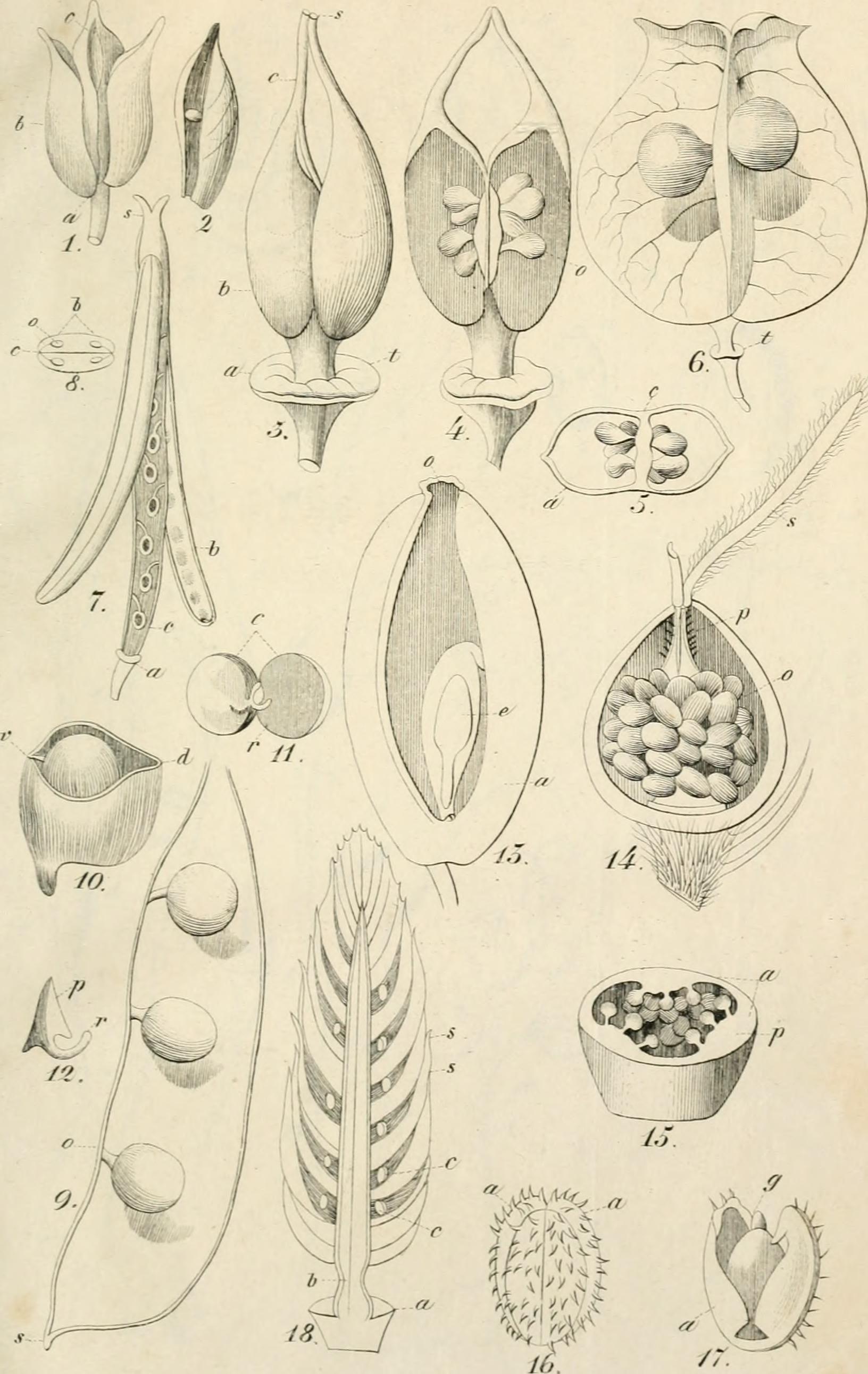 Studium Botanik