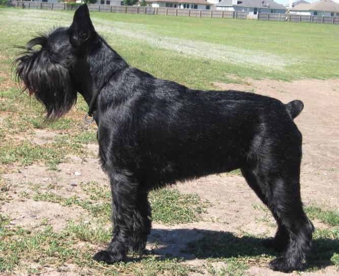 Dog Grooming Utah