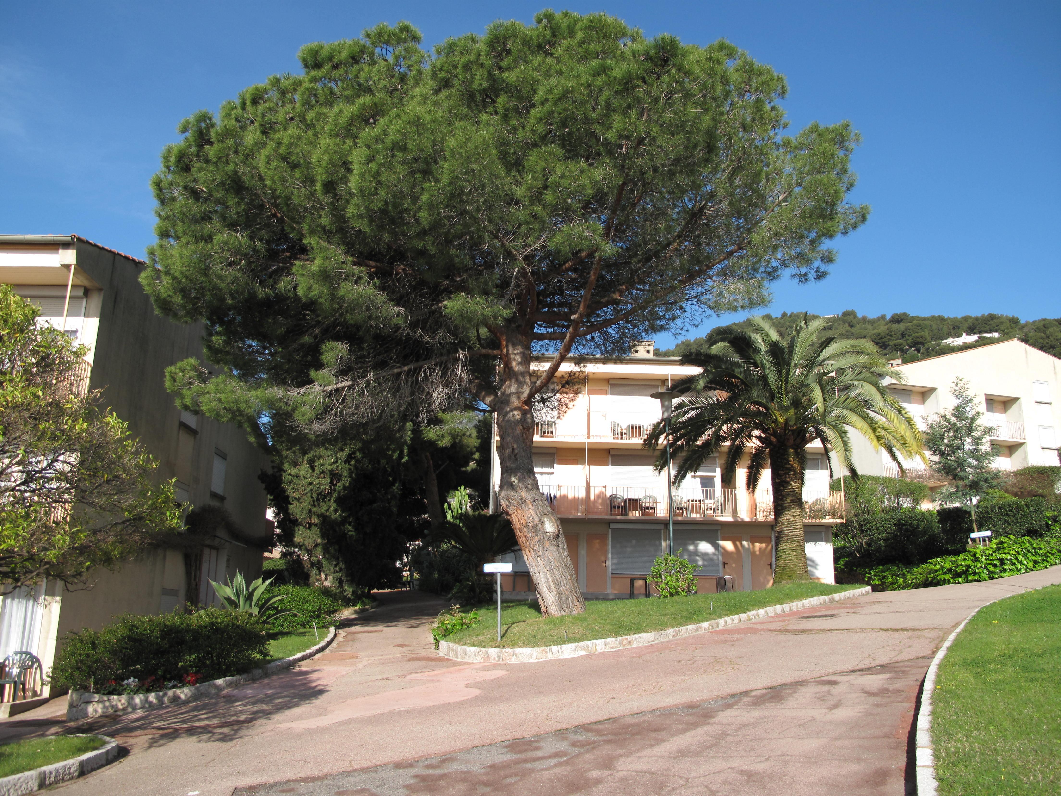 File building of azureva wikimedia commons - Piscine azureva roquebrune cap martin ...