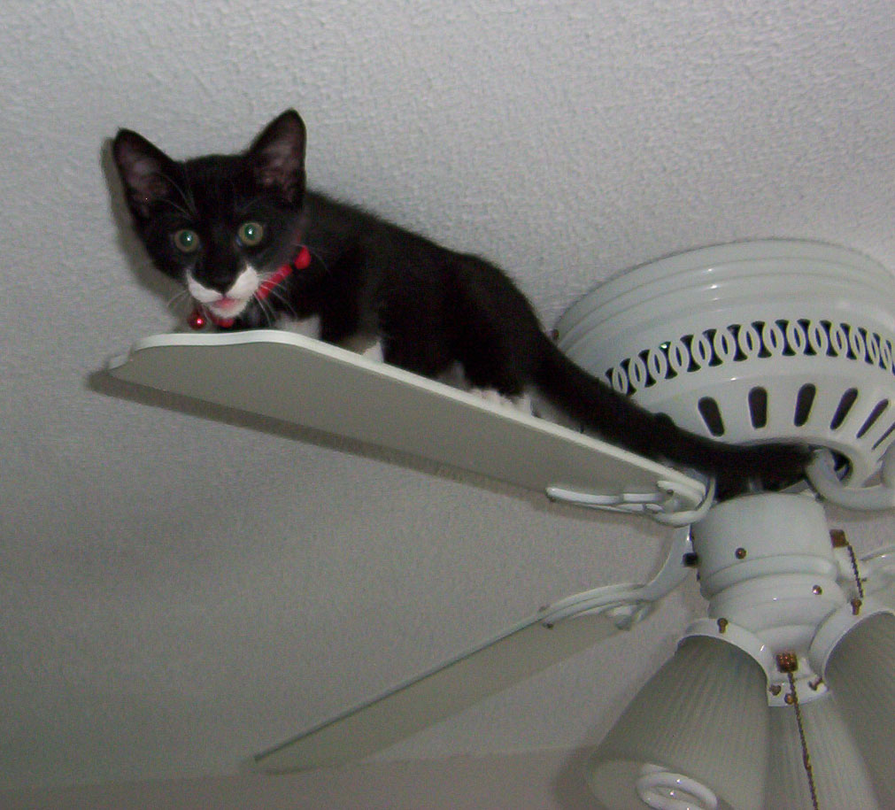 File Ceiling Cat Jpg Wikimedia Commons
