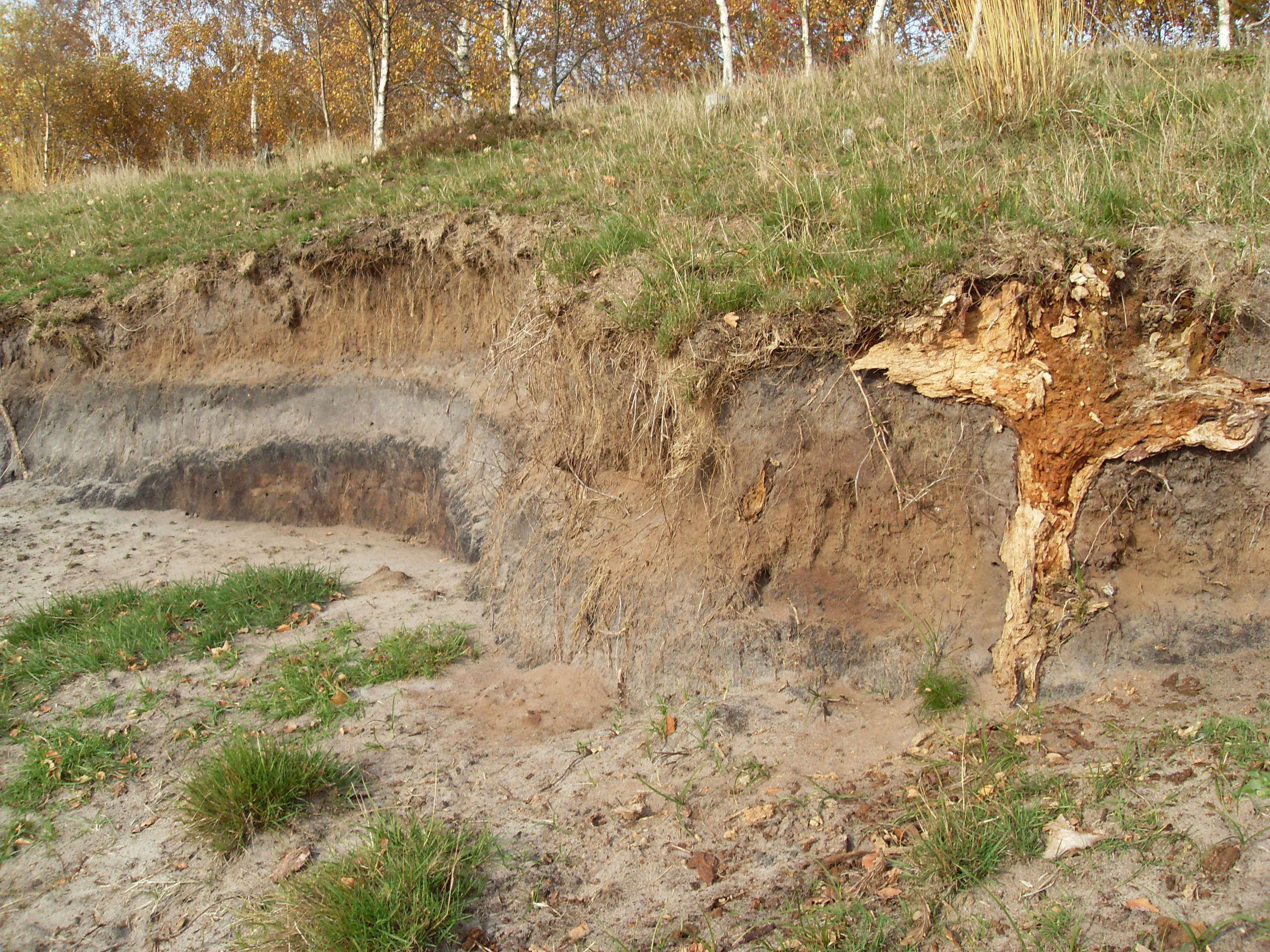сильноподзолистые почвы