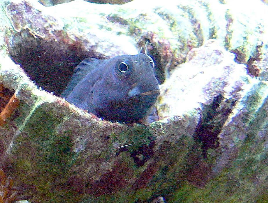 specie di pesci presenti nell u0026 39 oceano indiano