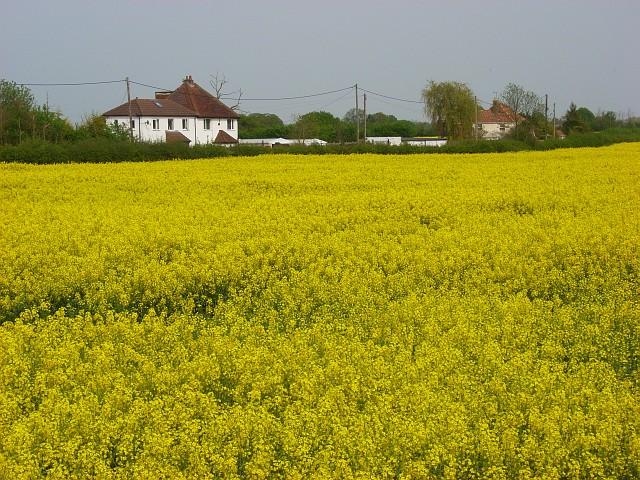 File:Farmland, Holyport - geograph.org.uk - 799077.jpg