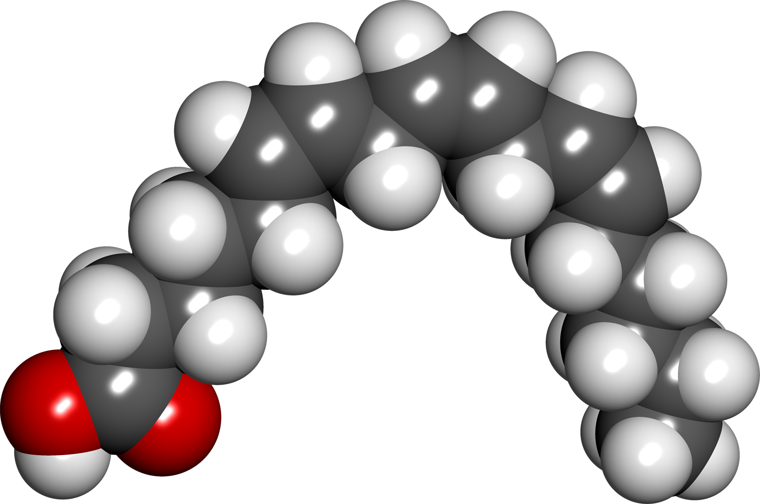 Kwas gamma-linolenowy