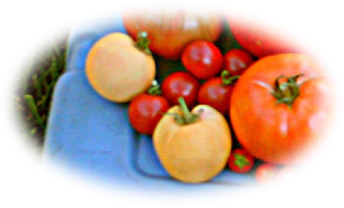 Garden Peach Wikipedia