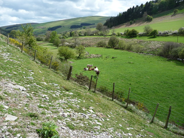 Grazing in the Upper Ceiriog Valley - geograph.org.uk - 1863961