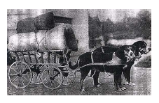 Швейцарские зенненхунды Greater_Swiss_Mountain_Dog_double-team_hauling_a_filled_wagon.