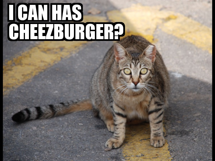Http Cheezburger Com   Hungry Cat Thieves