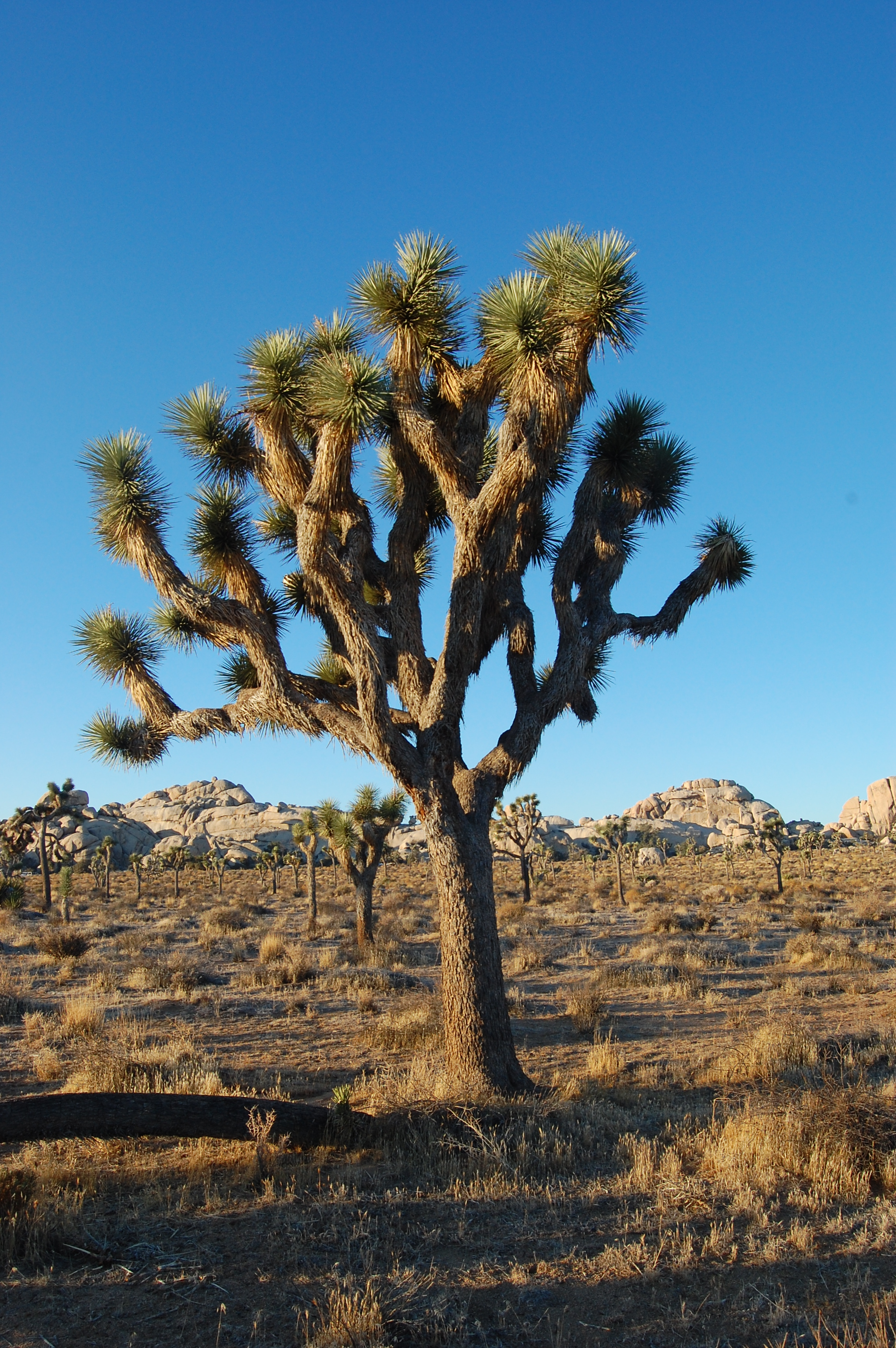 joshua tree dating Locked in an embrace, the bodies of a pair of hikers who went missing three months ago in california's joshua tree national park are thought to have been found.