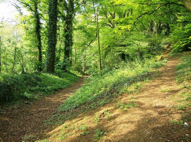 King John's Lane meets the Castle Wood footpath - geograph.org.uk - 461630