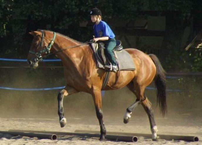 Koń wielkopolski - Horse Scanner