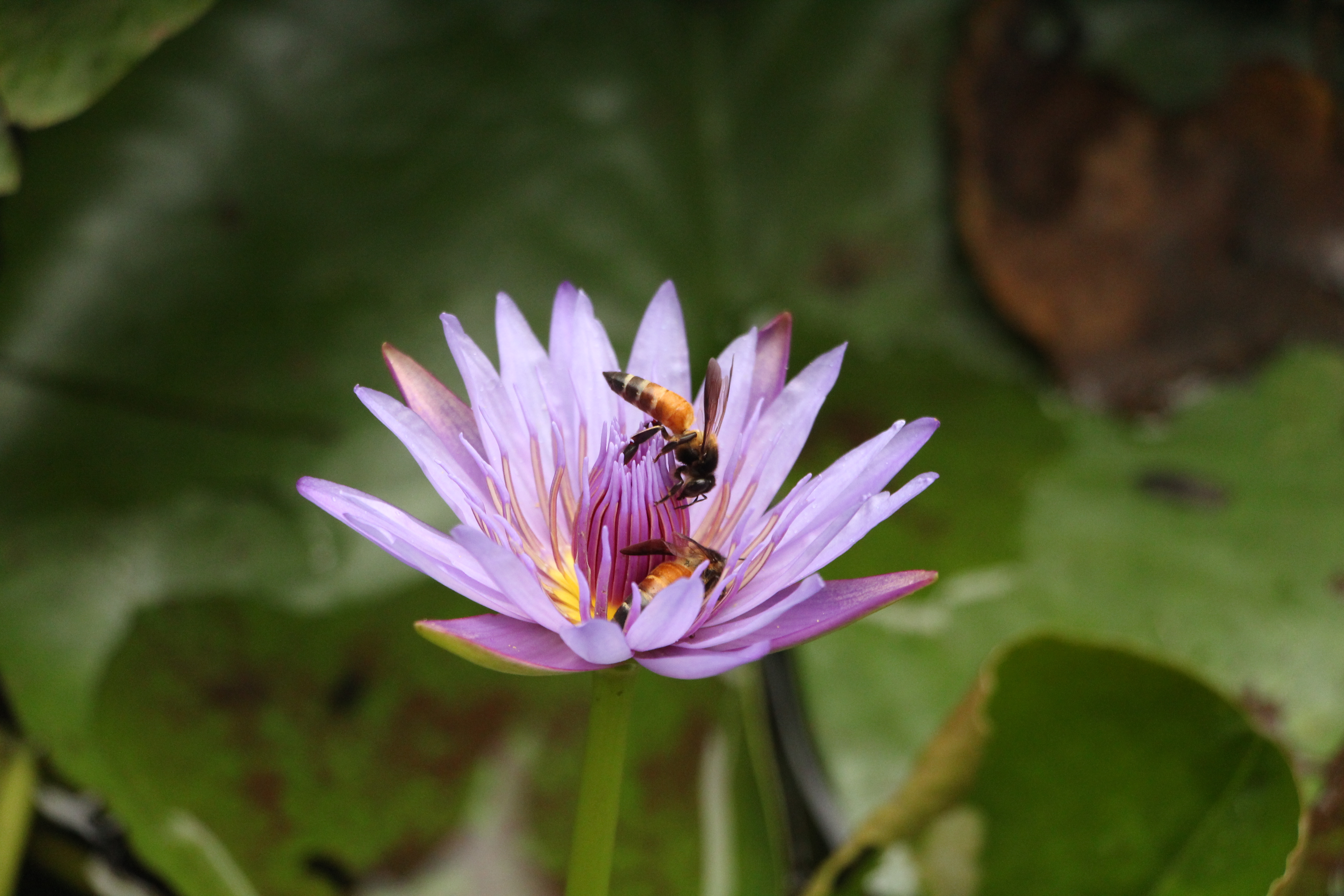 File Mapro Garden Mahabaleshwar Jpg Wikimedia Commons