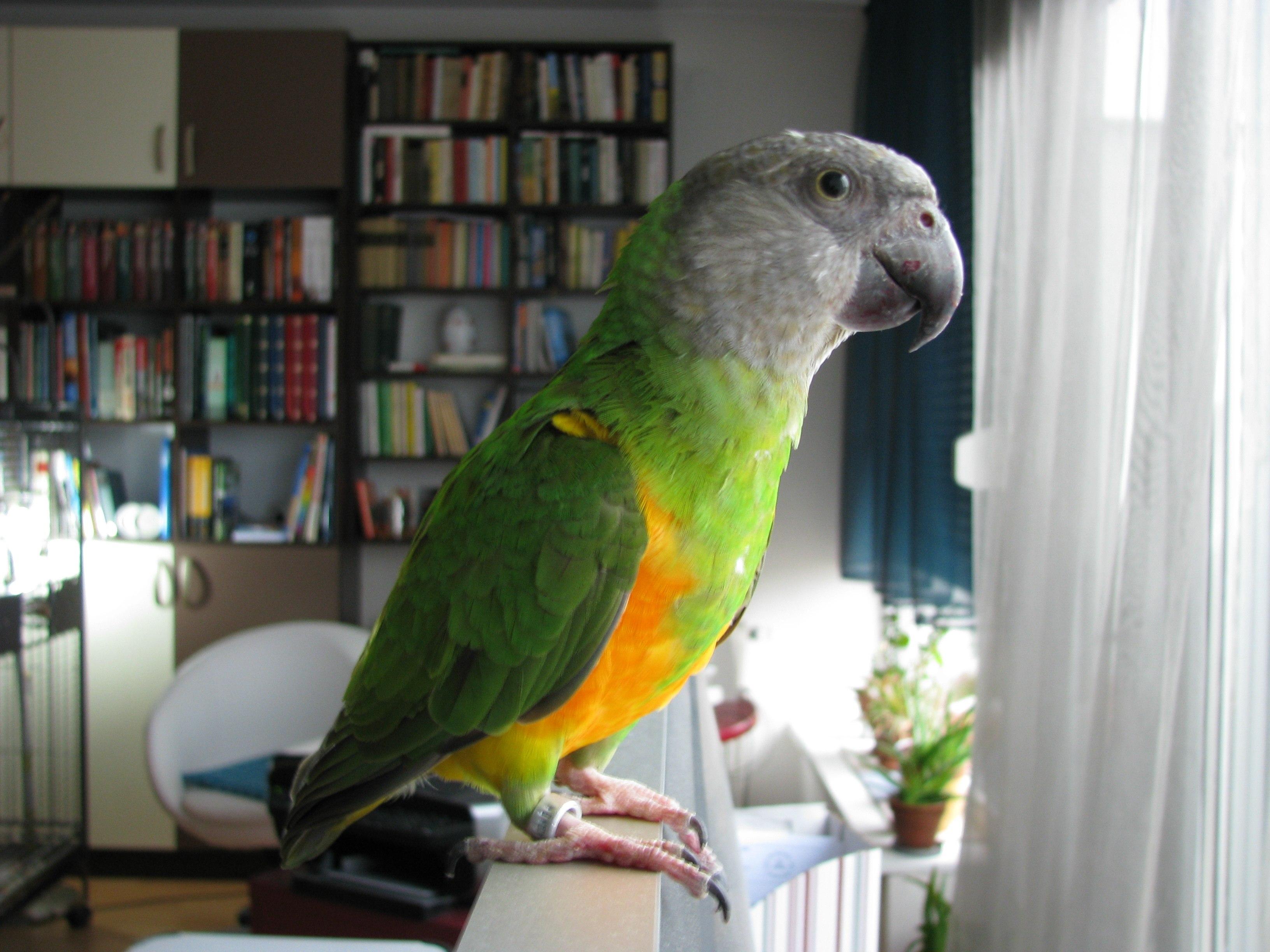 Room  Parrot Escape