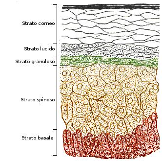 I pigmentary posizionano il laser di eliminazione