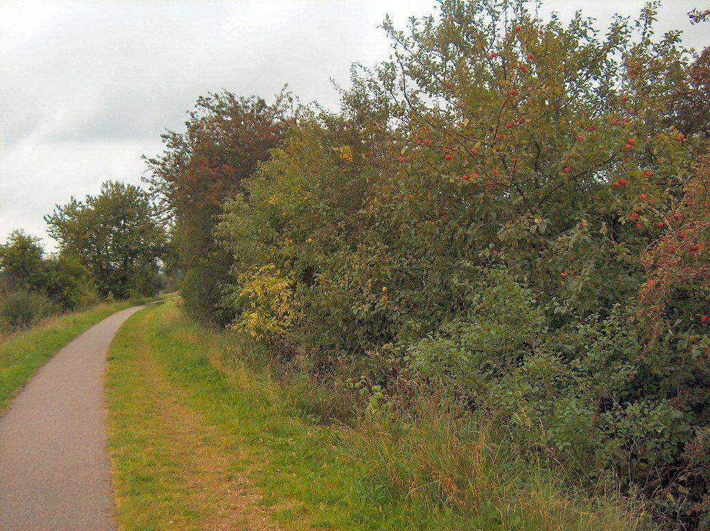 Asfaltsti og ridesti med æbletræer på Bryupbanestien