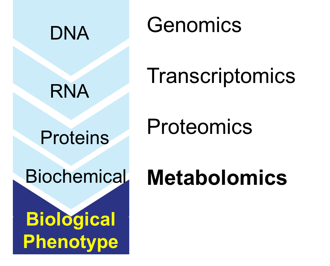 Image result for metabolomics