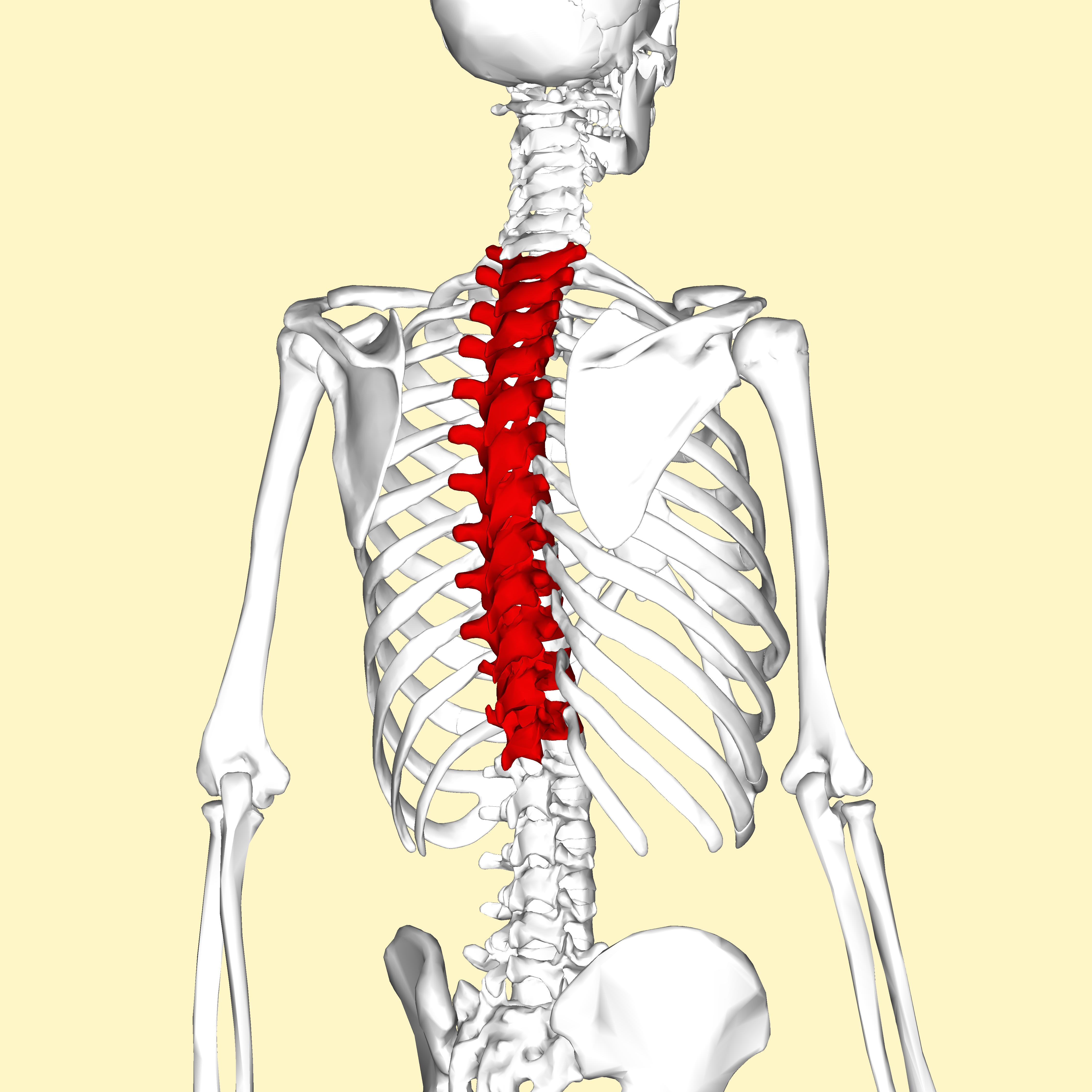 retrolisthesis thoracic spine