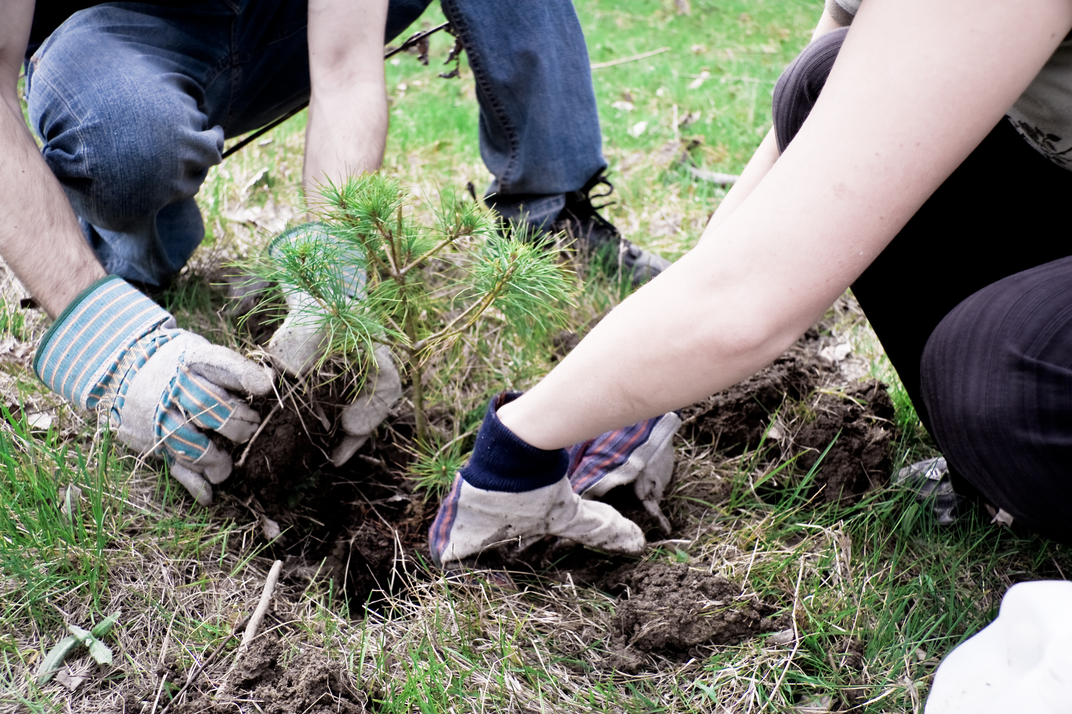 File:Tree planting 001.jpg - Wikimedia Commons